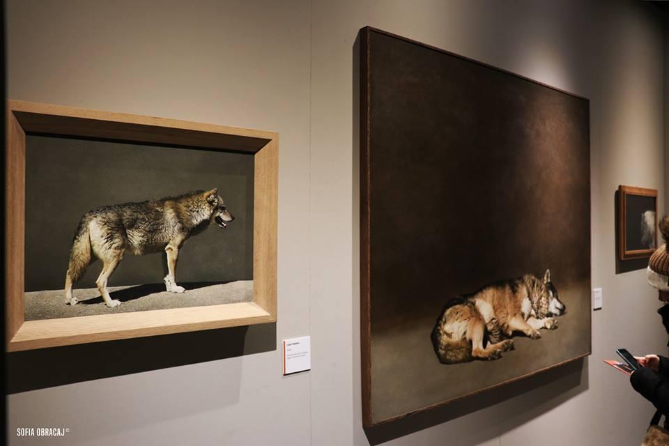 Record di visite per Tamer e i suoi animali