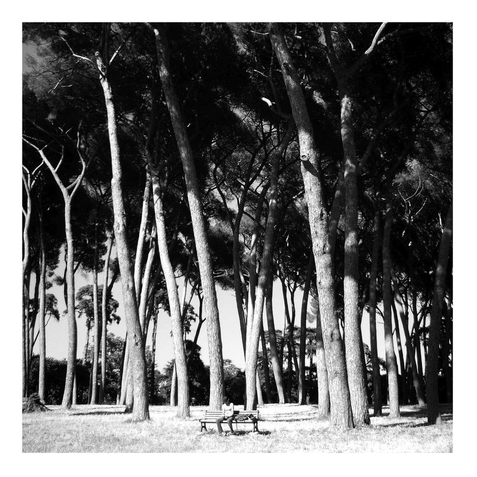 Alberi nel parco di Villa Doria Panphilj, 2009